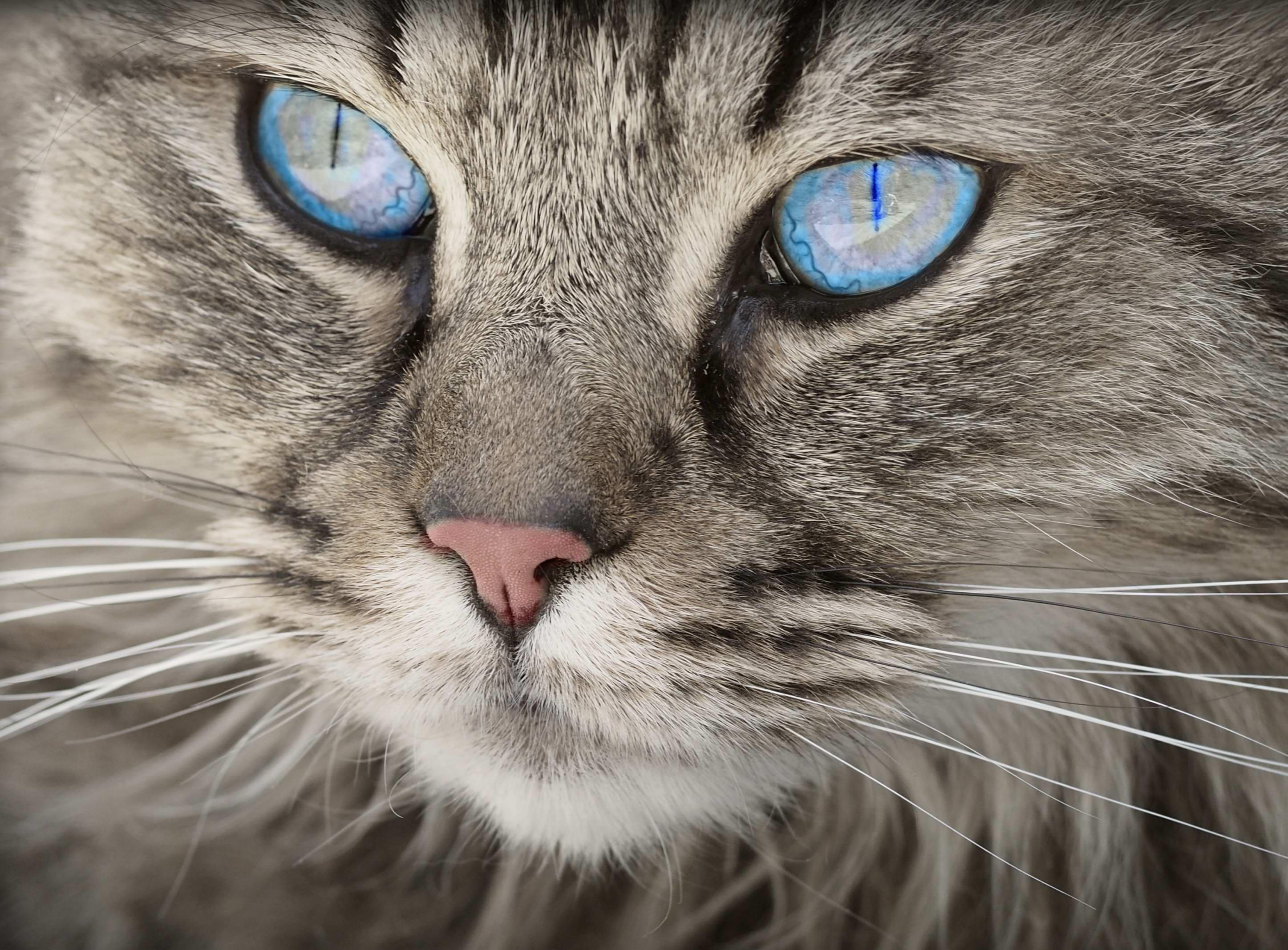 Přijďte si pro kočičku na For Pets 2018! Bude tam 10 útulků z celé ČR :)