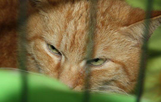 FOR PETS 2018: Nový domov pro 22 koček z útulků ♥